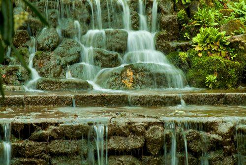 Photos Of Trevarno Tropical Gardens Cascade
