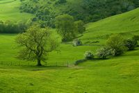 Dovedale near Thorpe