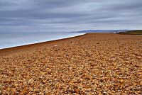 Chesil Bank and the Fleet