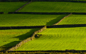 Drystone walls, Lake District
