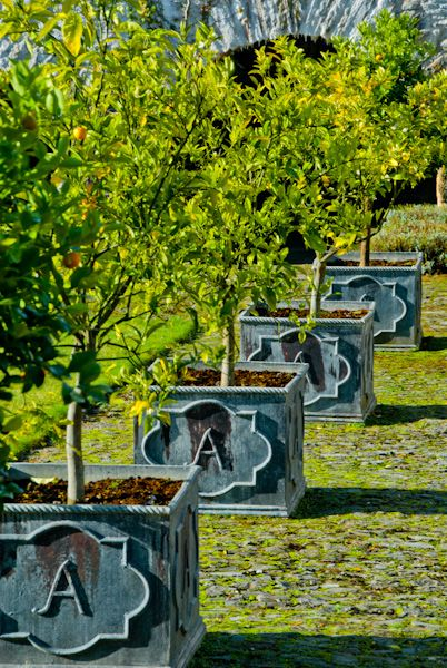 Aberglasney Gardens photo, Orange trees in the Cloister Garden