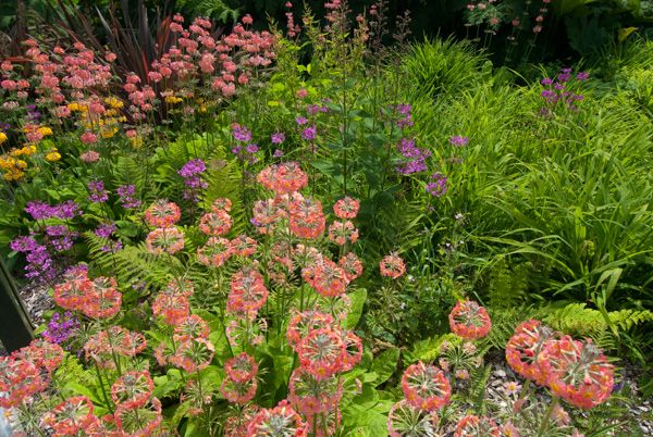 Armadale Castle Gardens and Museum of the Isles photo, Colourful summer blooms in the garden