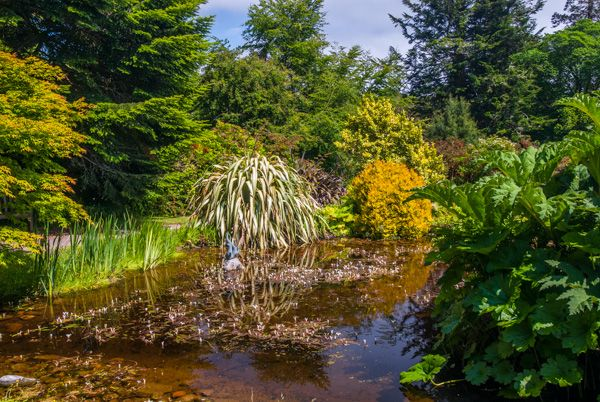 Armadale Castle Gardens and Museum of the Isles photo, A quiet garden pool