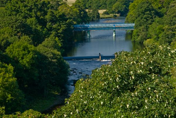 Barnard Castle photo, River Tees view