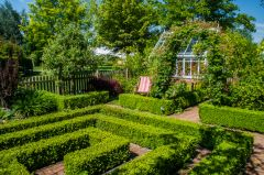 Box hedges in the Cottage Garden