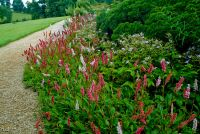 Belsay Hall and Garden, Flower borders
