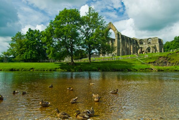 Bolton Abbey photo, Birds at play in the River Wharfe