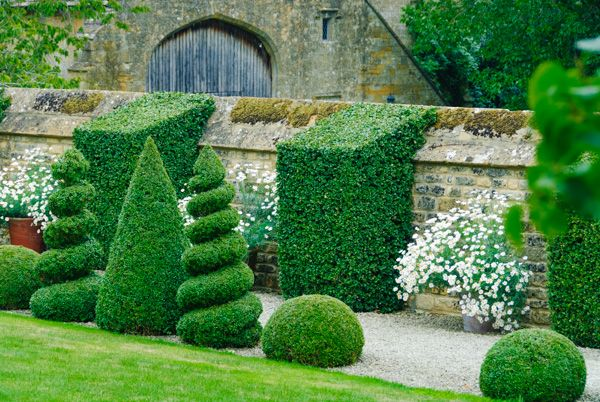 Bourton House Garden photo, The Topiary Walk