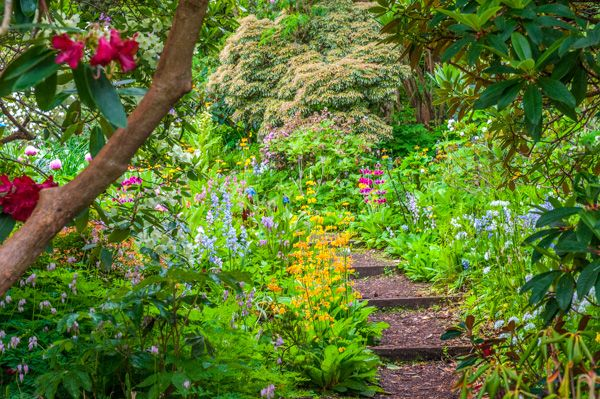 Branklyn Garden photo, Wooden steps along a rising path