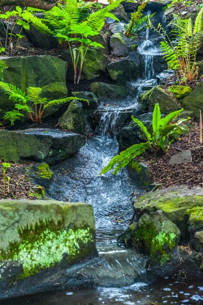 Branklyn Garden photo, Water trickles down a quiet stream