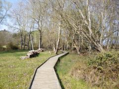 Brownsea Island, A boardwalk in the nature reserve (c) Mike Faherty