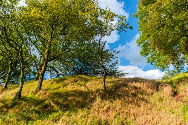Cadbury Castle Hillfort photo, The exterior face of the earthwork bank