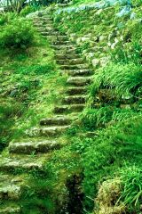 Stone steps leading up the cliffs
