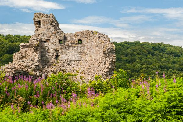 Caergwrle Castle photo, The castle in mid-summer