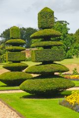 Canons Ashby, Topiary in the formal gardens