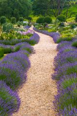 A pathway in the formal gardens