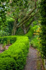 A path in the upper garden at Cherryburn