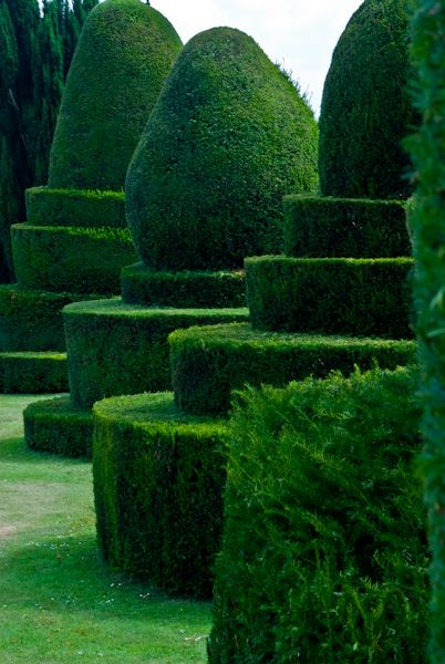 Chilham photo, Topiary hedges, Chilham Castle garden