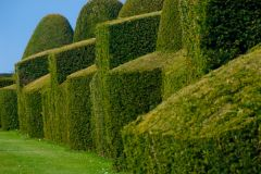 Chirk Castle, A clipped topiary hedge in the castle garden