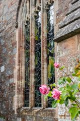 Roses outside the east window