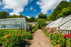A garden path past restored greenhouses