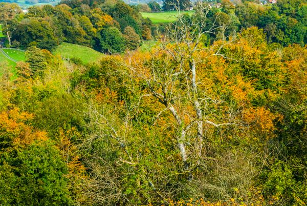 Dinefwr Park photo, The woodlands in Autumn