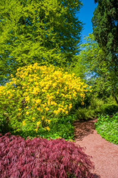 Dumfries House photo, A colourful trail in the garden