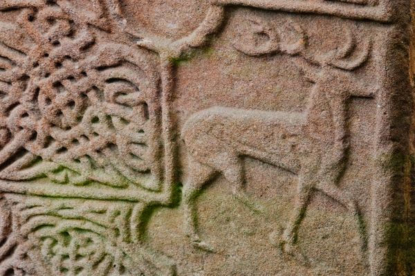 Eassie Sculptured Stone photo, Sculpture of a stag