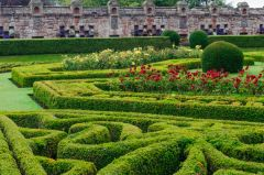 Box hedges in the formal gardens