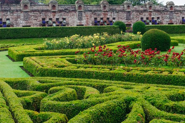 Edzell Castle photo, Box hedges in the formal gardens