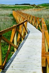 A modern causeway crosses reed-beds to the island