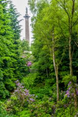 Gibside, The Column to Liberty