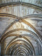 Cathedral vaulting (c) Kim Traynor