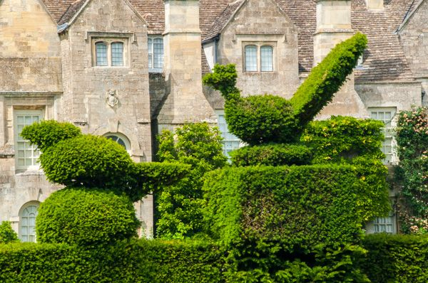 Grimsthorpe Castle photo, Garden topiary by the house