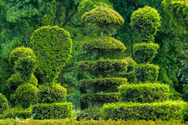 Grimsthorpe Castle photo, Fanciful topiary is everywhere you look
