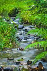 A lovely woodland stream