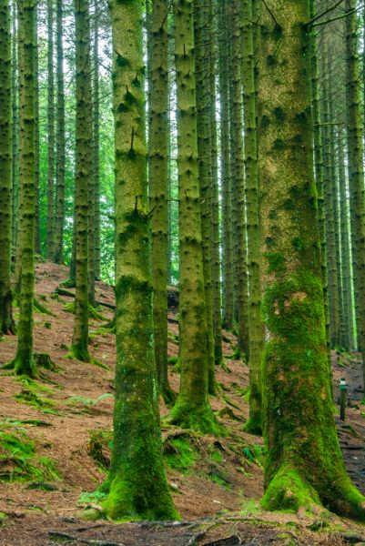 Grizedale Forest Park photo, The variety of woodland environments makes for very enjoyable walks