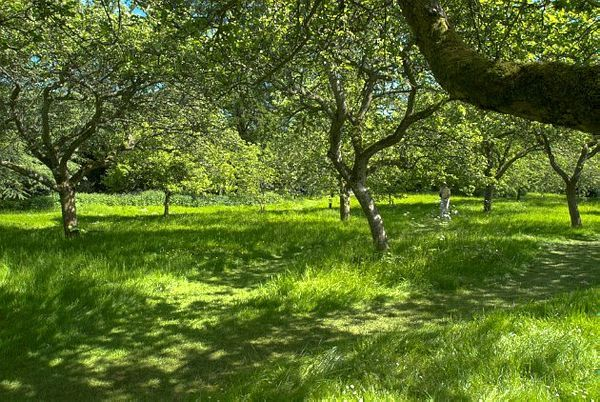 Hidcote Manor Gardens photo, A quiet wooded glade