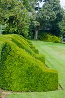 Hill of Tarvit House, Yew hedges