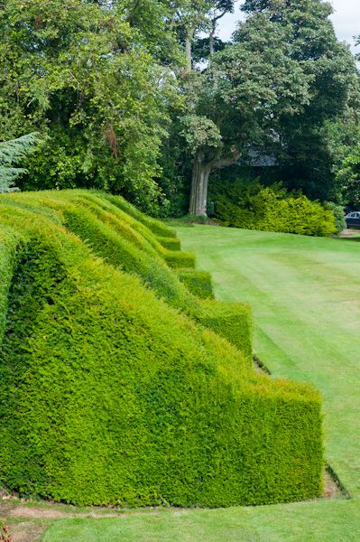 Hill of Tarvit House photo, Yew hedges