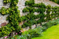 A sheltered garden wall