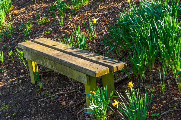 House of the Binns photo, A bench on the Woodland Walk