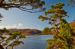 Inverewe Garden, Looking over Loch Ewe