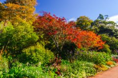 Inverewe Garden, Colourful foliage near the visitor centre