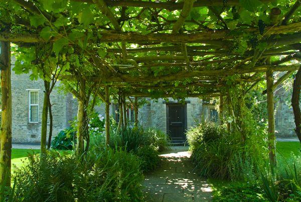 Pergola With Vines : pergola with vines