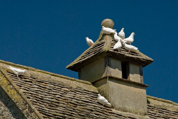 Kelmscott Manor photo, Dovecote