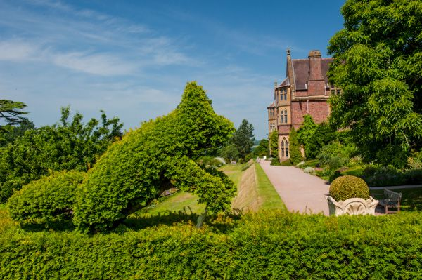 Knightshayes Court photo, A fanciful topiary hedge
