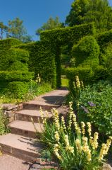 Garden hedges and steps