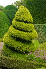 Levens Hall, Spiral shaped topiary in the garden