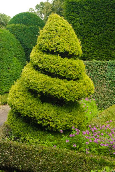 Levens Hall photo, Spiral shaped topiary in the garden